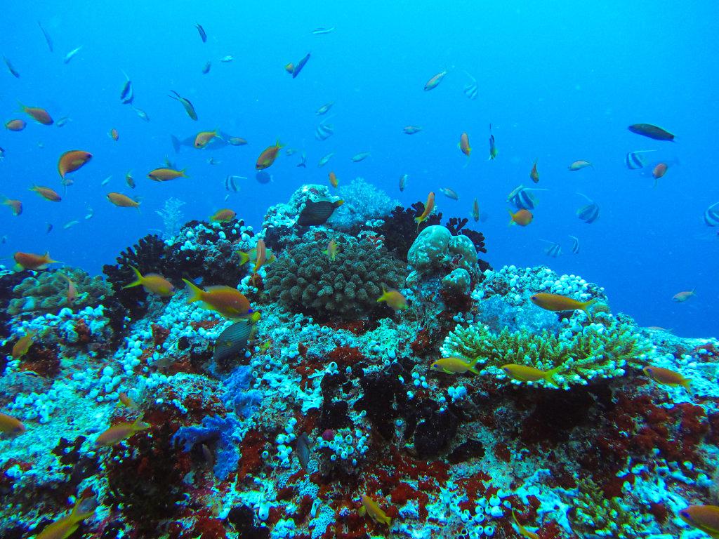 017-Maldives.jpg