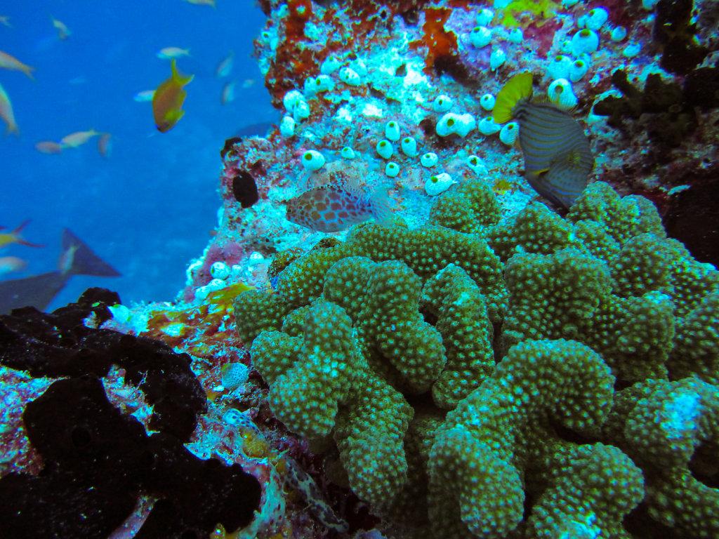 018-Maldives.jpg