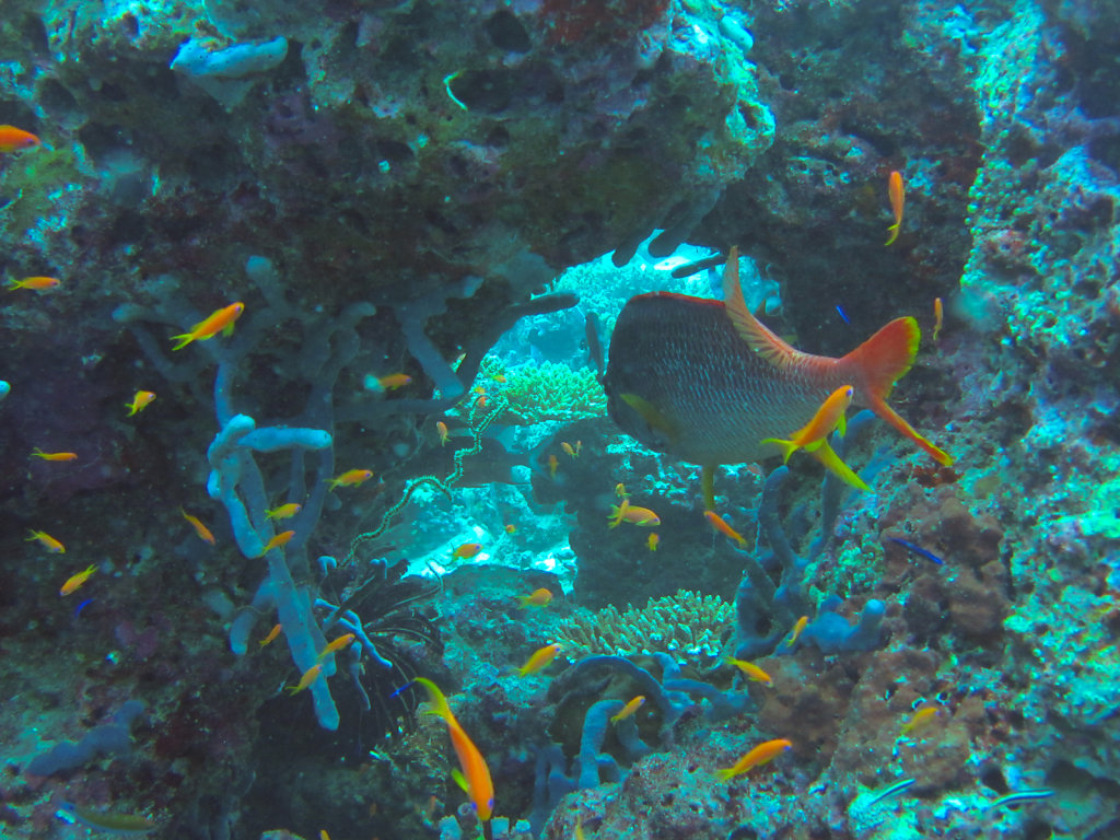 020-Maldives.jpg