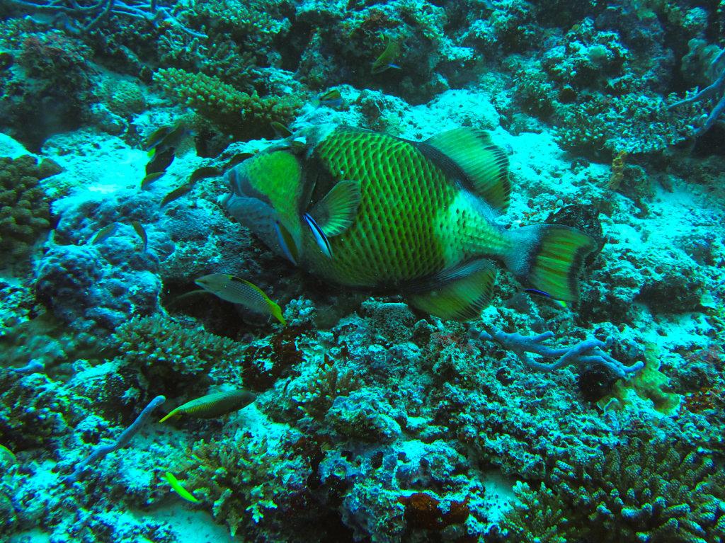021-Maldives.jpg