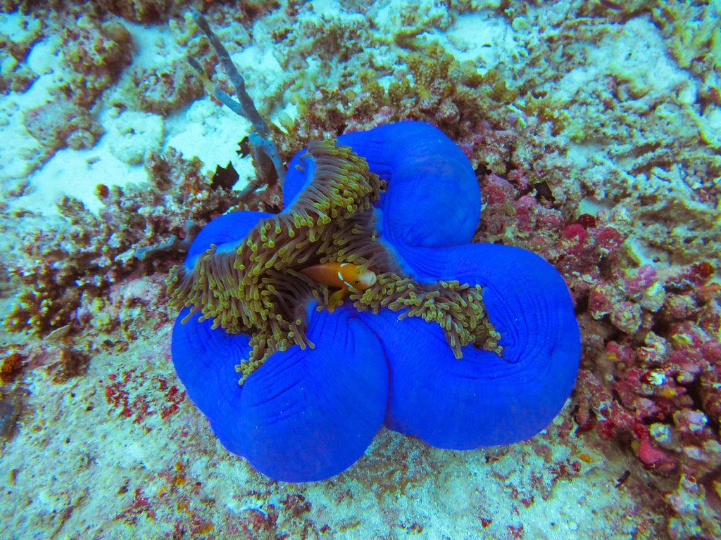 023-Maldives.jpg