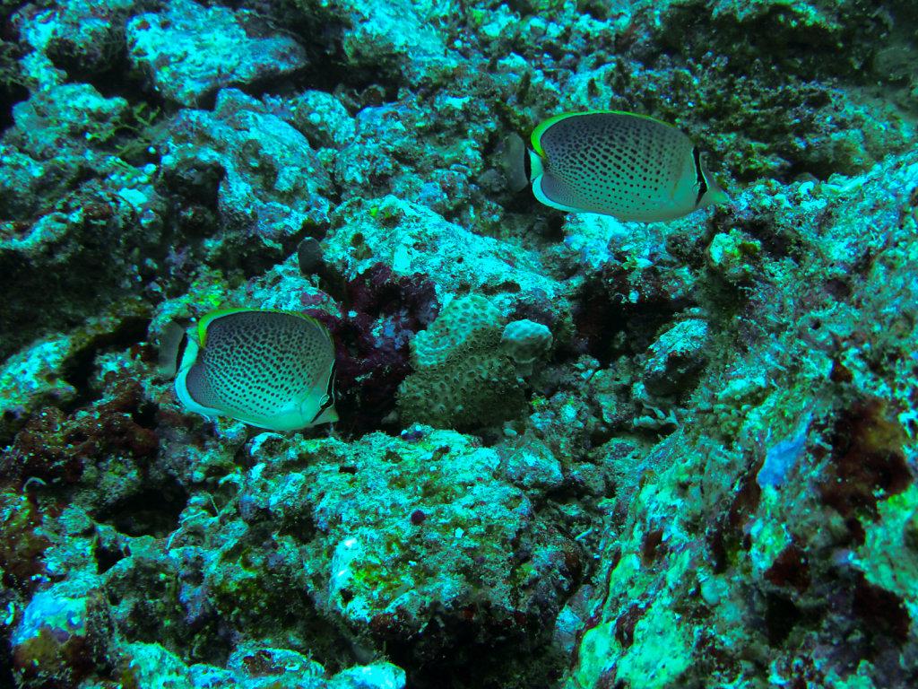 027-Maldives.jpg