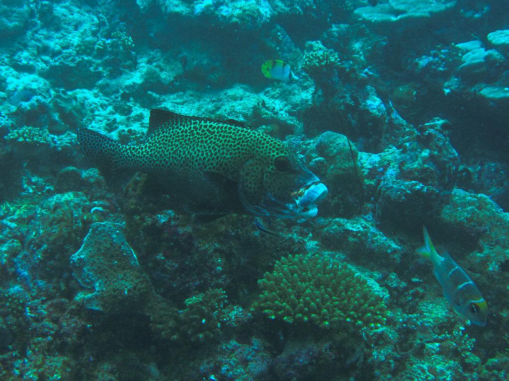 029-Maldives.jpg